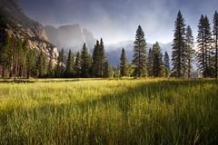 Yosemite Meadow (MarkMeredith) Tags: california usa mountains forest sunrise yosemitenationalpark yosemitevalley canonef1740mmf4l elome