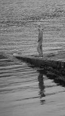 waterwatching (ghisan) Tags: skye jgblp