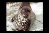 ss10-02 (ndpa / s. lundeen, archivist) Tags: color film boston 1971 massachusetts nick slide seal slideshow 1970s bostonians bostonian dewolf nickdewolf photographbynickdewolf slideshow10
