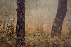 mysterious fog (idaachristina) Tags: flowers trees green nature norway fog sepia forest vintage landscape polaroid mysterious