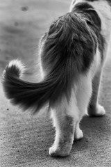 Walk away (bratli) Tags: blackandwhite cat feline attitude walkaway catitude bratli kittyperry