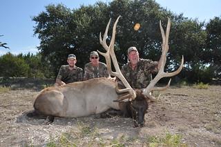 """407"""" Elk Bull"""