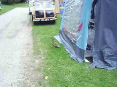 mot-2005-berny-riviere-034-campsite-resident-ducks_800x600