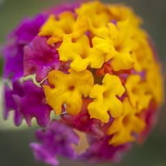 Botanische Tuinen Utrecht (siebe ) Tags: flower holland macro netherlands dutch utrecht nederland bloem 2014 botanischetuinen