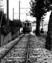 Sintra electric tram - (mgkm photography) Tags: travel urban bw portugal monochrome train 50mm nikon sintra gimp linux pretoebranco blackandwhitephotography eléctrico travelphotography monochromephotography blackwhitephotos opensourcephotography ilustrarportugal d7000 europeanphotography mobilidadeelectrica