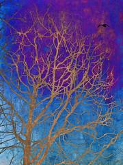 Golden Silhouette (bethrosengard) Tags: bethrosengard photomanipulation digitallyenhanced photoart digitalmagic digitalart