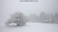 EZBERDINA (Obikani) Tags: opakua álava araba euskadi negua invierno winter tree trees forest white snow elurra canonikos basquecountry