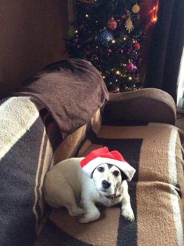 Doggy Holidays