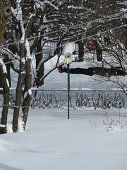 ** Un nichoir à la Gumby ** (Impatience_1 (peu...ou moins présente...)) Tags: gumby nichoir cabanedoiseaux birdnest neige snow arbre tree clôture fence impatience m supershot coth abigfave coth5 saveearth