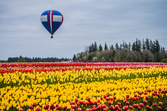 Willamette Valley Springtime (ahockley) Tags: flowers hotairballoon oregon plants tulipfestival tulips woodburn woodenshoetulipfestival