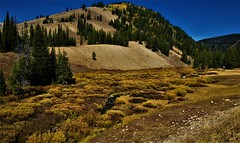 Fall Foliage Up High (The VIKINGS are Coming!) Tags: autumn wyoming bridgermtns alpine highcountry cougar elk deer bare