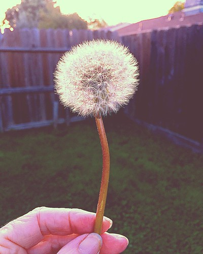 Wishing on a Dream Hope my Dream comes true. #wish #dream #hope #workhard #plans #vision #dandelion #symbol #believe (pixieclipx) Tags: dandelion moveforward moveon wishing wish believe hope dreams instagramapp square squareformat iphoneography 1977