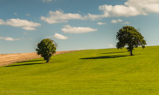 trees and shadows (France)-1097