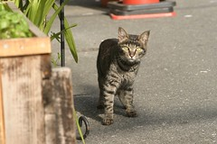 cat at Honmachi, Osaka, 2003 (jtabn99) Tags: city japan cat osaka honmachi chuouku catmoment