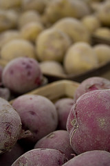 red and white spuds (Light Orchard) Tags: blue red food white vegetables fruit potatoes farmers market farm vegetable produce bruceschneider 2014lightorchard