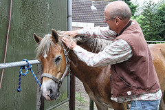 Pret met sarah (gill4kleuren - 12 ml views) Tags: horse me sarah hair fun gill washing saar paard haflinger