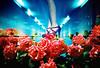 薔薇の風に乗って -standing on the rosy sky (Hodaka Yamamoto) Tags: park longexposure flower station rose garden underground lomo lca xpro lomography crossprocessed xprocess doubleexposure crossprocess leg double multipleexposure crossprocessing doubles multiexposure ratseyeview