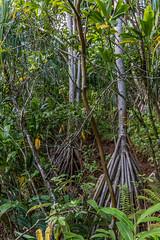 IMG_8984 (cbnewling) Tags: kauai hanakapiai
