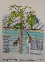 2014-07-20 So Ugly It's Beautiful: Next Door (jaguarish) Tags: roof building sketch brisbane ugly