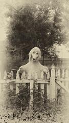 Sweepin' the clouds away (Randy Durrum) Tags: white black bird sepia fence big gothic samsung nik durrum