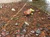 Chokapik et son marécage (Leelewine) Tags: fish poisson alvin chimères tendres