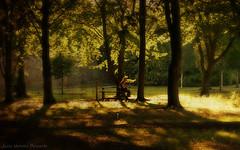 Senectud (Lucía Morales Guinaldo) Tags: park old parque sunset atardecer eld vejez senescence senectud agedelderly