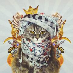Happy Eid (Quinn's way) (-Meesho-) Tags: pet cats cute animal cat design graphicdesign eyes kitten eid adorable quinn عيد happyeid عيدسعيد