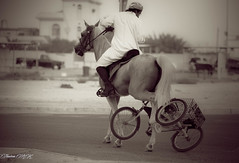 A horse accident with a cycle (THASLEEM MK) Tags: horse kids cycle qatar shamal