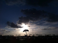 SolarTree (Ph.ClaudioLuciano) Tags: street blue summer cloud sun tree solar strada nuvole emotion blu beam flare napoli naples sole albero cobalt cobalto emozioni raggio solare