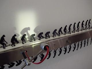 Evolución Primate