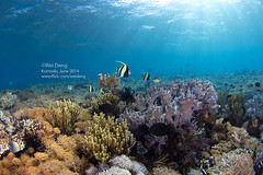 8H3A6019s (Wei on the way) Tags: ocean canon indonesia nationalpark underwater wideangle scuba diving fisheye 5d nexus komodo strobes liveaboard aggressor