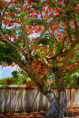 Cozumel (Mark Chandler Photography) Tags: ocean cruise sea vacation color colour tree gulfofmexico nature water canon mexico photography hotel boat photo ship 7d caribbean cozumel markchandler