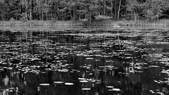 Sweden 2014 (SS) Tags: trees light summer lake holiday black blur texture monochrome grass reflections photography focus rocks pentax sweden branches perspective crop trunk 169 tones k5 2014 ss