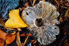Autumn (Phoenix photo and craft UK) Tags: autumn fall mushroom woods bark leafs twigs