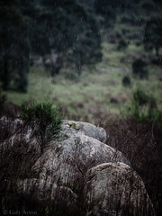 "boulders in the rain • <a style=""font-size:0.8em;"" href=""http://www.flickr.com/photos/44919156@N00/15113205351/"" target=""_blank"">View on Flickr</a>"