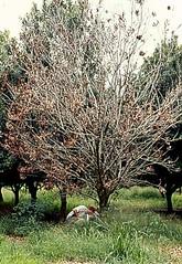 Anglų lietuvių žodynas. Žodis macadamia integrifolia reiškia macadamia integrifolia vaisiai lietuviškai.
