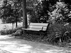 HBM-Park bench in b/w (Explore!) (SCOTTS WORLD) Tags: park trees light shadow blackandwhite grass bench fun woods midwest angle pov michigan seat july brush september adventure sidewalk orion 248 2014 hbm oaklandcounty olympusepm1