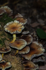 FOTO0027-1 (Thoran Pictures, Thx for more then 4 million views) Tags: fall mushroom dark photography bomen forrest pentax herfst bos paddestoel donker k3 woud zwam pentaxart pentax18135mmwr madebythoranpictures theuseofanyoftheimagesinthissetwithoutpriorwrittenpermissionisprohibitedwiththeexceptionofpersonalusebytheindividualsportrayedtherein
