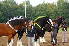 IMG_3628-k (Mandy Bramavi) Tags: show horse shire