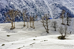 Snow 7 ... (Bijanfotografy) Tags: nikon nikond800 nikon180mm28afd jammukashmir jk kashmir sonamarg snow mountains winter hillside