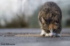 Katze 02 (Fooß) Tags: