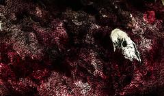 UR (dorkthrone) Tags: art leaves pen ink watercolor paper death skull cow orlando time florida exhibition wash solo return void occult eternity eternal 2014 vespertines