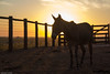 af1407_9881 (Adriana Füchter) Tags: sunset brazil horses horse beauty animals silhouette brasil fauna rural caballo cheval farm side country symmetry burro fries jumento cavalos ameland impressed pferde cavalo pferd finest natures equine fazenda chevaux paard paarden sweetface equino galope slott equines friese friesche pferden mywinners friesische professionalequineimages snogeholms