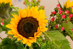 Sun flower (MR-Fotografie) Tags: sun flower nikon nikkor sonnenblume 18105mm d3100 mrfotografie