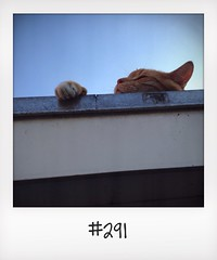 "#DailyPolaroid of 16-7-14 #291 • <a style=""font-size:0.8em;"" href=""http://www.flickr.com/photos/47939785@N05/14545579677/"" target=""_blank"">View on Flickr</a>"