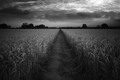 Divided We Stand (Russ Barnes Photography) Tags: sunset summer blackandwhite field mono fuji wheat monochromatic fujifilm warwickshire xe2 russbarnes fuji1855mmf284