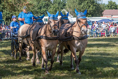 Fte de la clairire  Seichebrires (Pierre ESTEFFE Photo d'Art) Tags: france cheval transport promenade fte paysage chevaux ne attelage carriole clairire canoneos70d loiret45 seichebrires