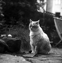 Thinking (gritgrain) Tags: sanfrancisco blackandwhite bw 120 film rollei analog rolleiflex cat trix blackandwhitefilm
