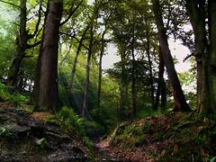 Ancient Woodland Aydon