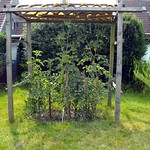 old-tomatohouse-on-unkempt-lawn thumbnail